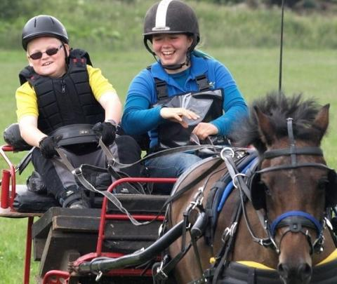 Pony Carriage Driving